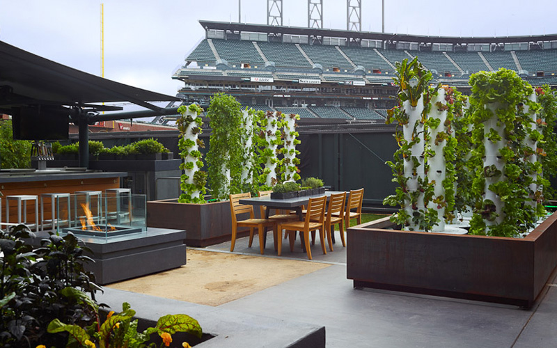 Giant's edible garden at AT&T park